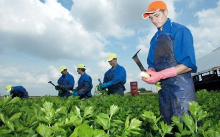 عمالة موسمية