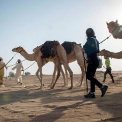 رحلة الهجن تجدد استكشافها صحراء الإمارات