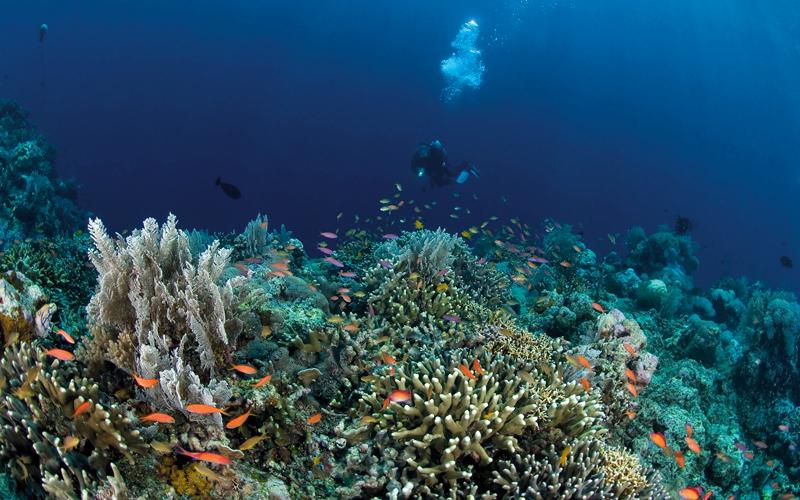 تعتبر الشعاب المرجانية قبالة جزيرة سيلايار الإندونيسية كنزاً من الأحياء البحرية. د.ب.أ