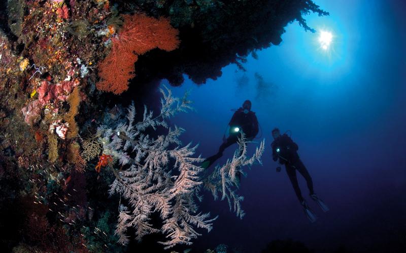 تمتاز منطقة الغوص قبالة سواحل جزيرة سيلايار بتنوّع الحياة البحرية.  د.ب.أ