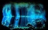 بالصور.. روعة أعماق البحار