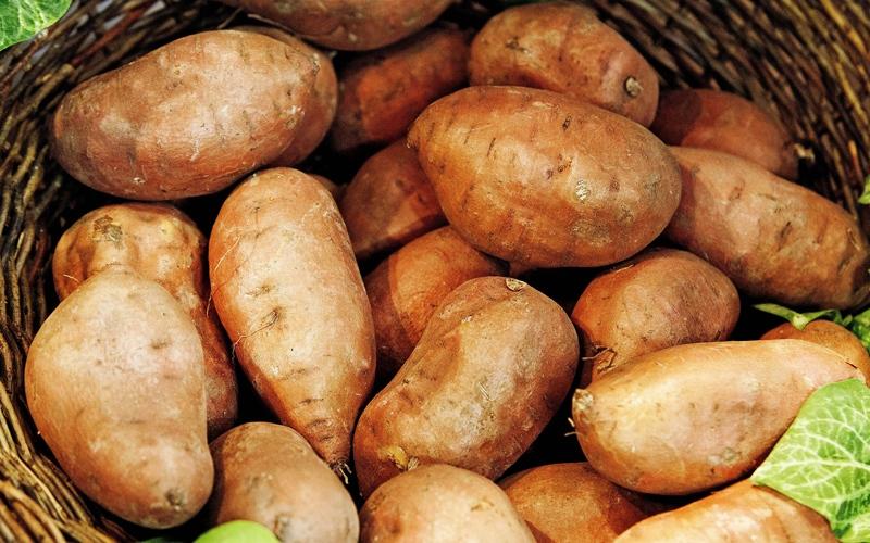 البطاطا الحلوة غنية بالألياف ومضادات الأكسدة