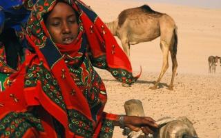 الصورة: «نساء التمر»..البحث عن طعم المال والحرية في الصحراء الكبرى