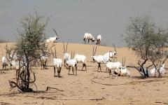 الصورة: تجارب مميّزة وفرص للتعرف إلى الحياة البرية في صحراء دبي