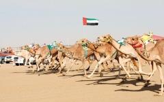 الصورة: دبي في أبريل.. سباقات الهجن وسيارات كلاسيكيّة في الطقس المشمس