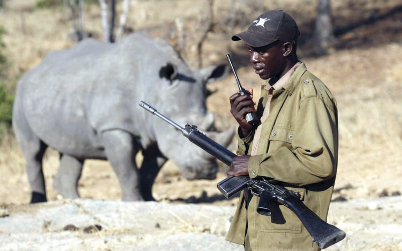 صيادون غير شرعيين يقتلون وحيد قرن نادراً
