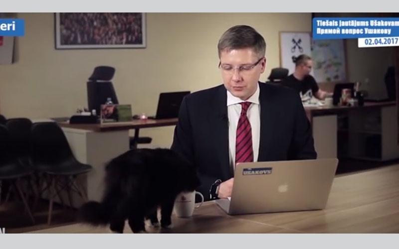 الصورة: بالفيديو.. قطة تقتحم بثاً مباشراً لعمدة وتحرجه