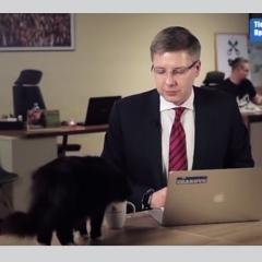 بالفيديو.. قطة تقتحم بثاً مباشراً لعمدة وتحرجه