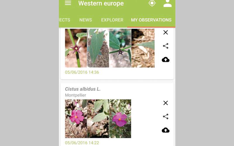 PlantNet Plant Identification.. للتعرف إلى الفصائل النباتية باستخدام الكاميرا